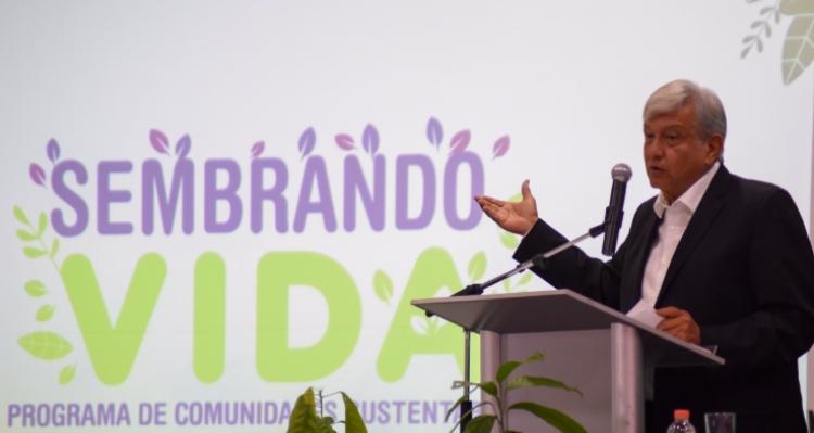 """Secretaría de Bienestar se defiende ante acusaciones de """"deforestación"""" en programa """"Sembrando Vida"""""""