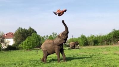 El acróbata que juega basquetbol con elefantes africanos