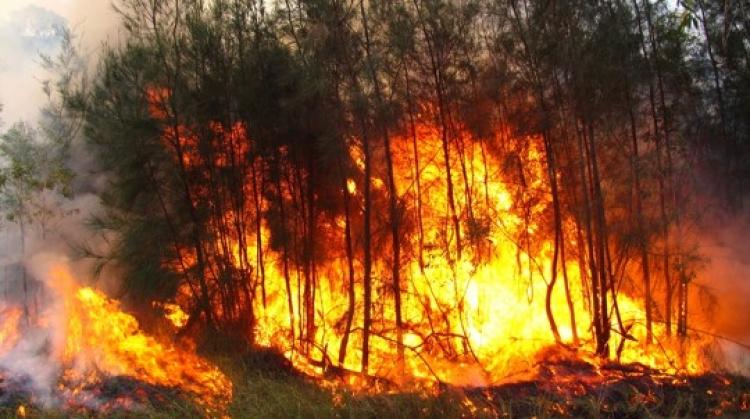 Impulsan tecnología espacial contra incendios forestales