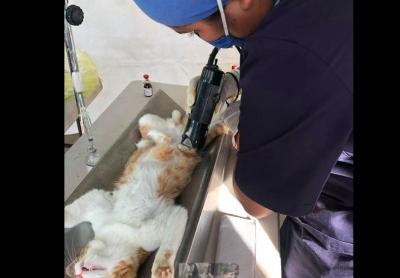 Efectuarán Primera Jornada de Esterilización canina y felina para machos