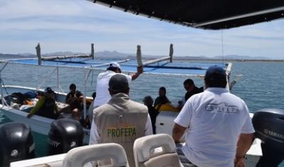 Protegen al tiburón ballena en temporada de avistamiento.