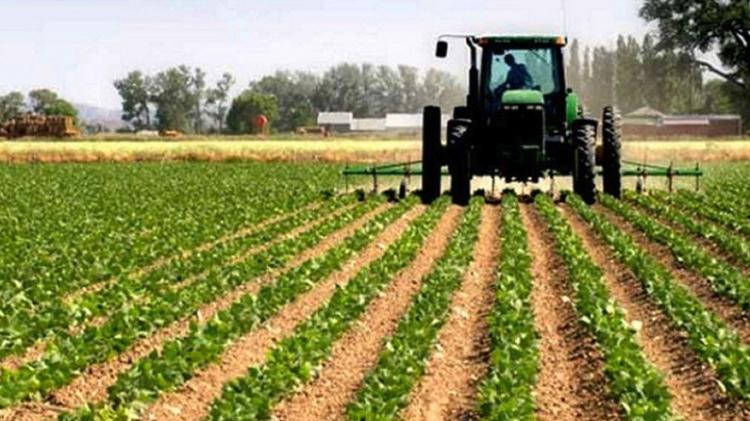 Sector Agrícola se integra al programa laboral Jóvenes Construyendo el Futuro