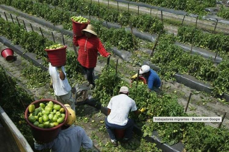 Cifra de trabajadores migrantes aumenta sustancialmente en 5 años: ONU