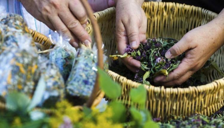 Se está analizando la posibilidad de regular la medicina herbolaria: COFEPRIS