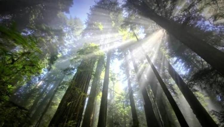 Hoy Celebramos a bosques y selvas en el Día Nacional del Árbol