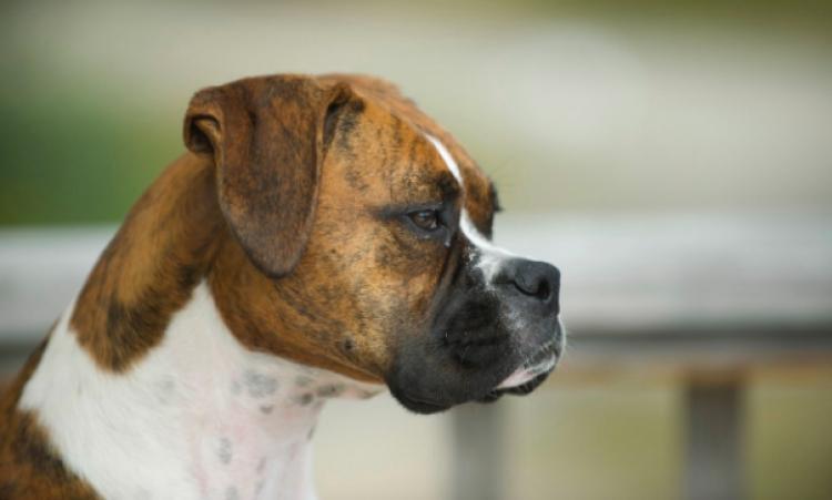 Senadores piden reforzar control reproductivo de canes de la calle