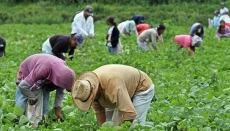 Se reune México con Canadá para revisar el programa  de Trabajadores agrícolas temporales.
