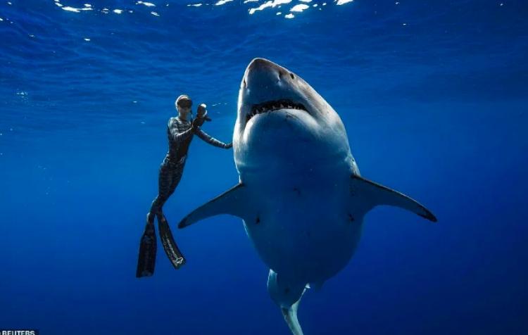 Captan en Hawaii al tiburón más grande del mundo