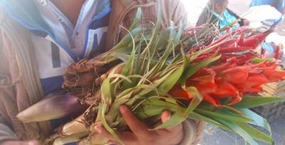 Tehuacán pide a la población no adquirir flora protegida de la región
